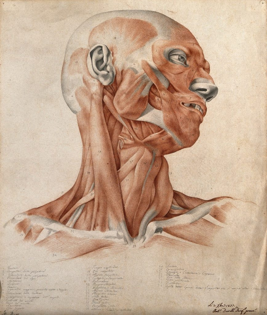 Écorché, Antonio Durelli 1837 red chalk and pencil