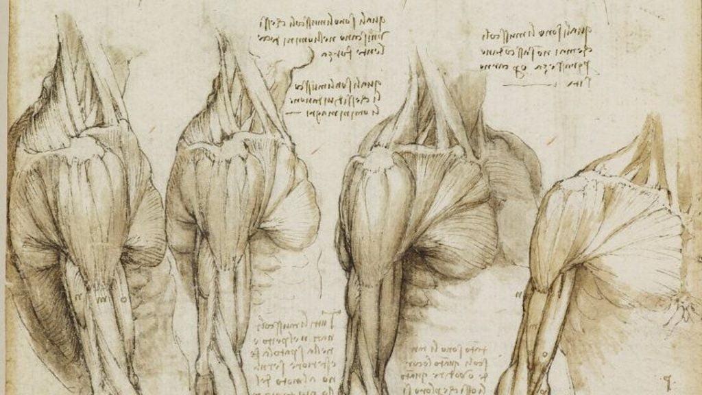 Écorché - Leonardo da Vinci