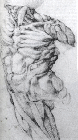 A sketch by Michelangelo di Buonarroti